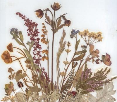 Pressade blommor