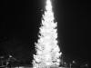 Tradition på Torget, Ute-julgranen
