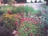 Blommor i rött - temynta