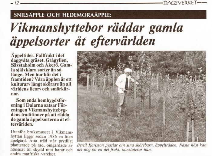 Tidningsurklipp (Tidningen Dagsverket) Vikmanshyttebor räddar gamla äppelsorter åt eftervärlden.